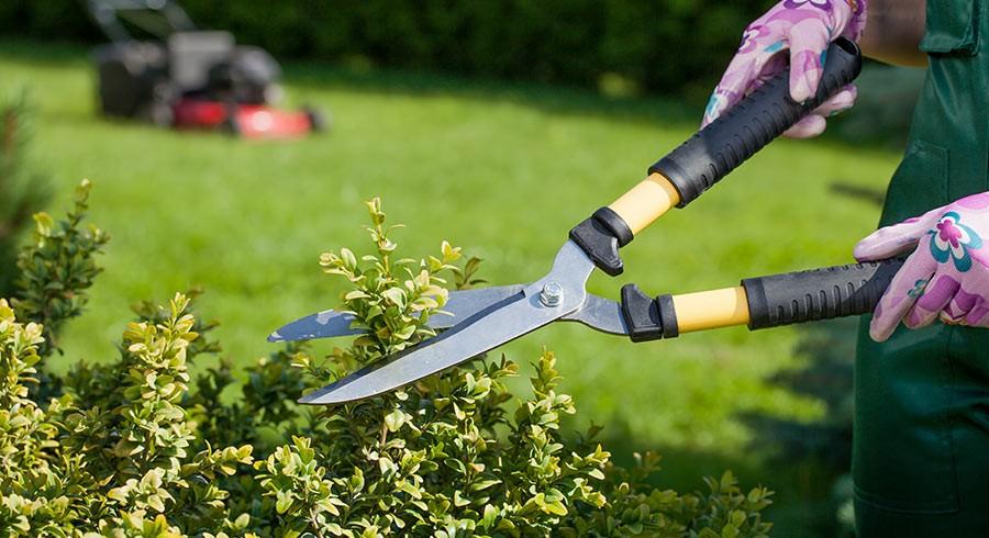 Santa Fe Paysage | Entreprise paysagère en Corrèze : 50 % de crédit d'impôt pour tous vos travaux de jardinage